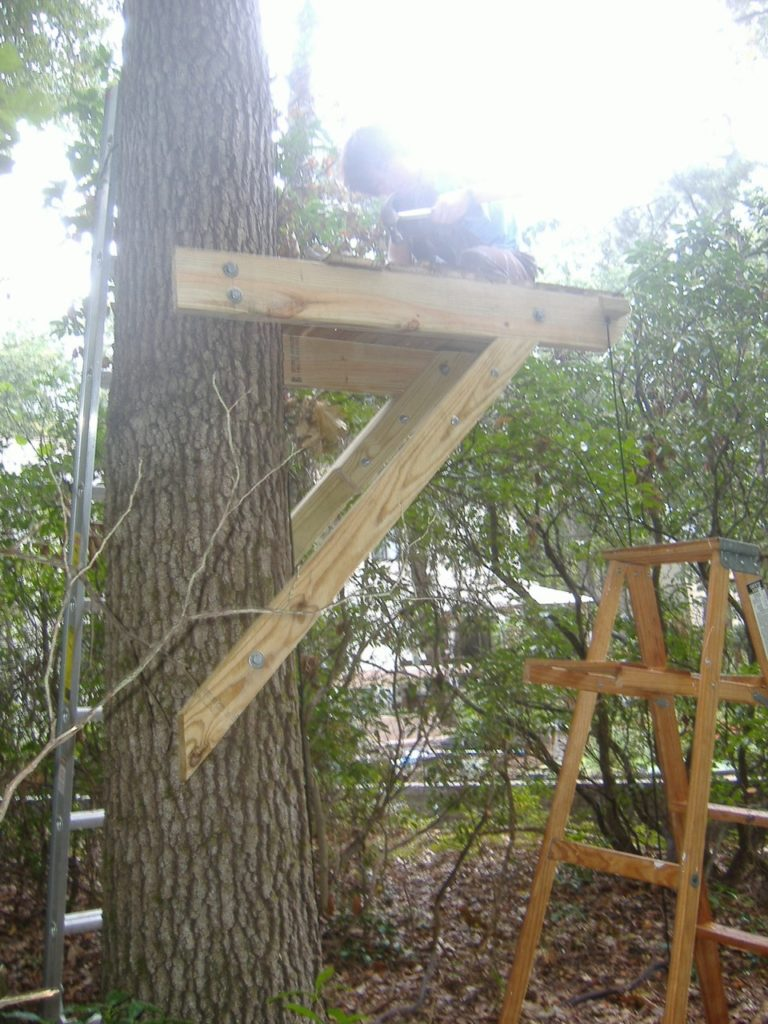 treehouse-1-1